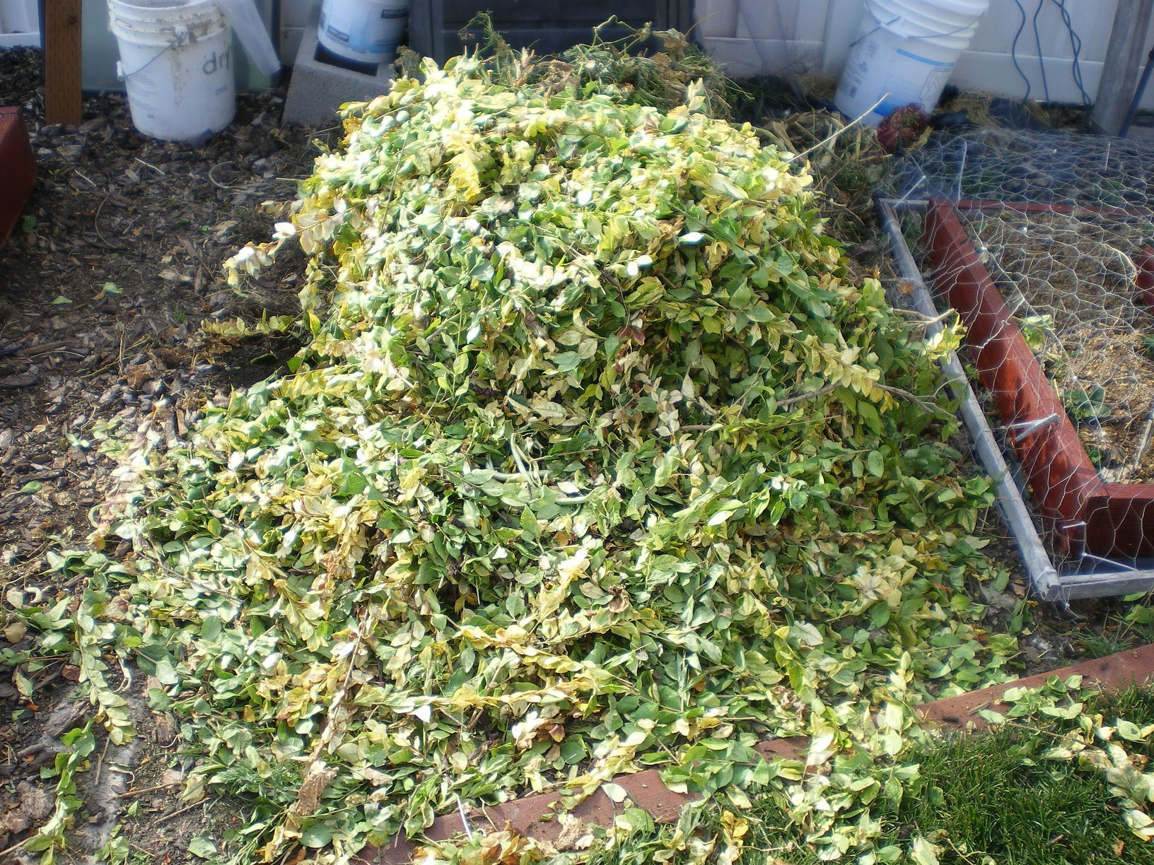 bush-greens-1