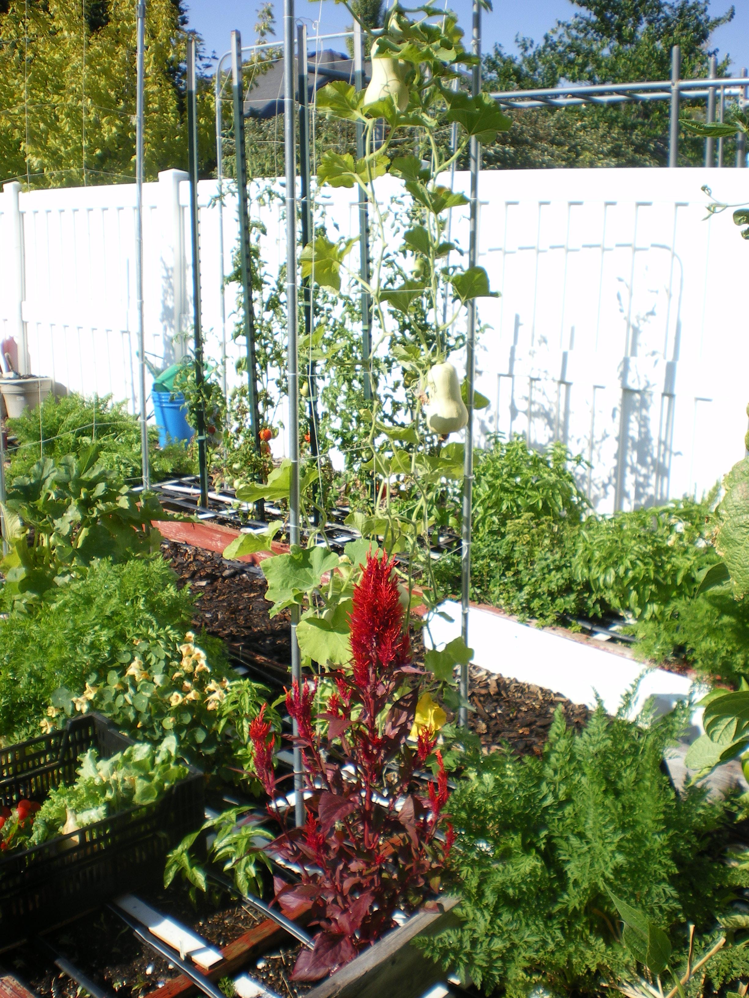 sfg-garden