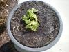 3-12-rhubarb