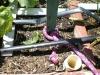 zucchini-1-square