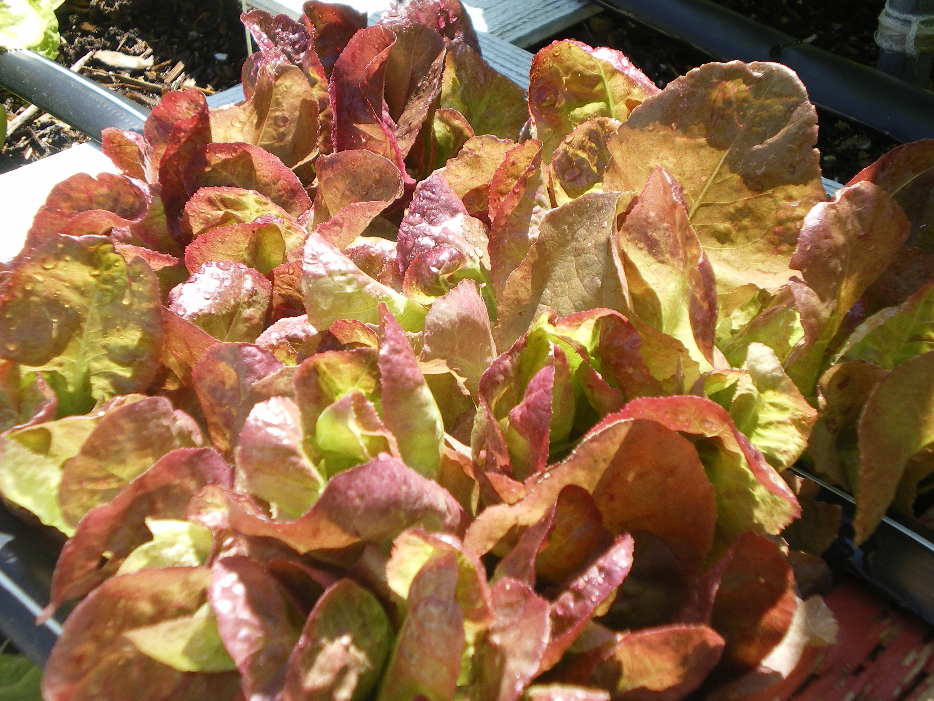 That Mels\' mix and square foot gardening stuff doesn\'t work!…. – The ...