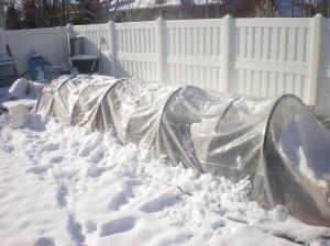 sun after snow