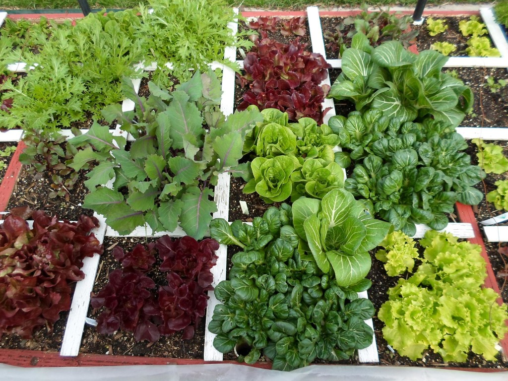 April 14th square foot garden – The Wealthy Earth