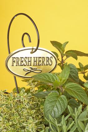 fresh herbs-1