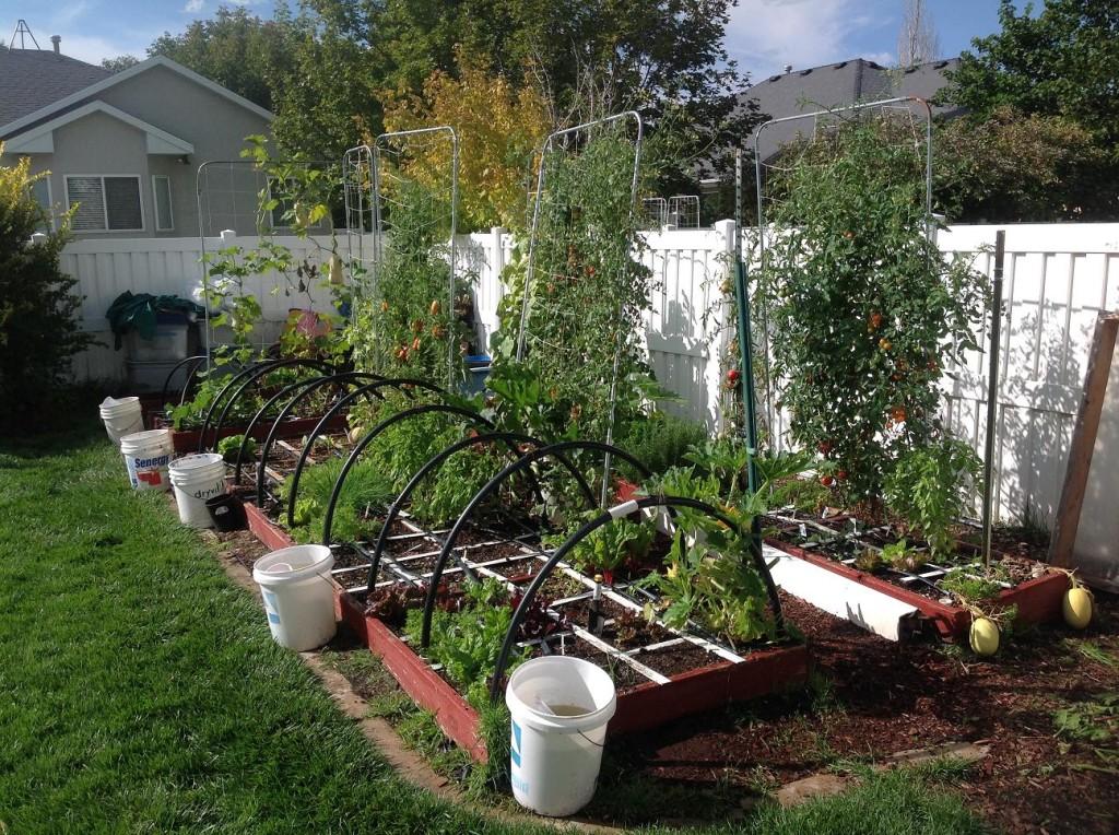 91414 fall garden