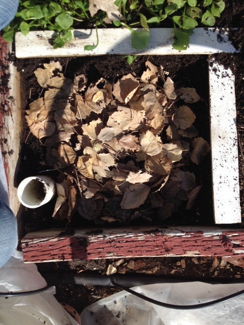 composting with leaves
