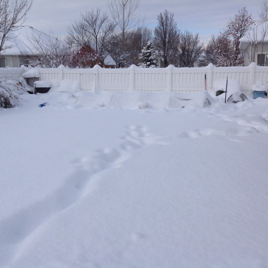 snow covered winter garden