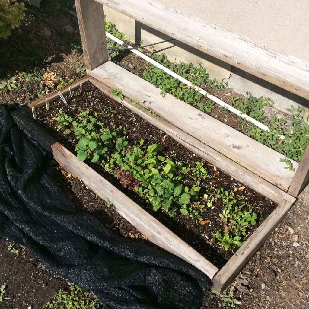 How does your cold frame grow The Wealthy Earth
